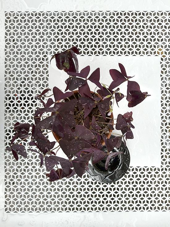Atelier Andrea Nicolo_Waiting_Purple Flower